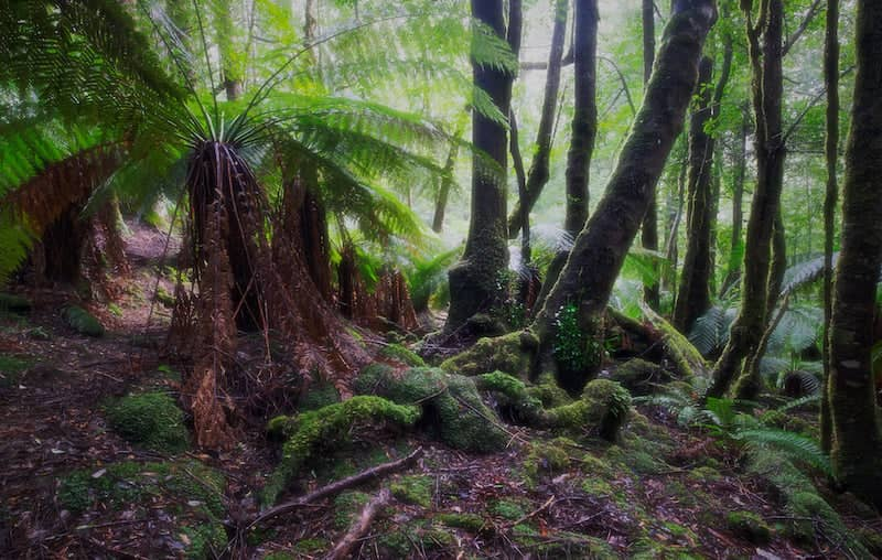 Styx Forest - Tasmania - Green Institute - Photo Credit Paul Costin