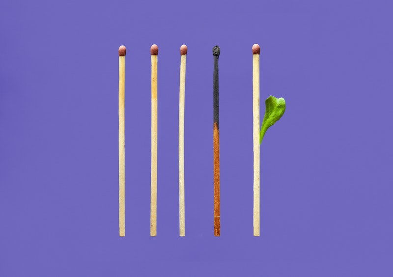 In Conversation with Danielle Celermajer and Scott Ludlam: From Grief To Possibility To Action - Image of 5 matches - first three fine. Fourth match burnt. Fifth match sprouting a leaf.